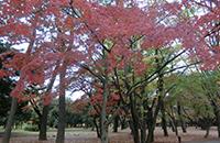 肥後細川庭園ヨガ&日本茶でいっぷく